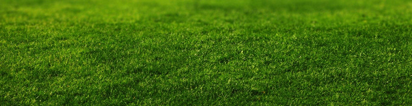 HB-McClure-Grass-Image